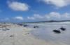 নিউজিল্যান্ড উপকূলে আটকা পরে প্রায় ১  শ তিমির মৃত্যু